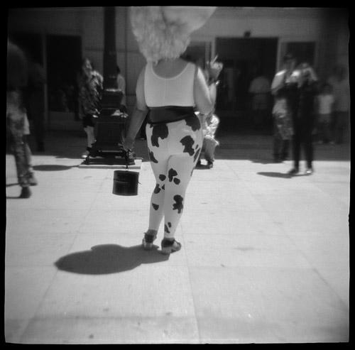 Holstein, 1996